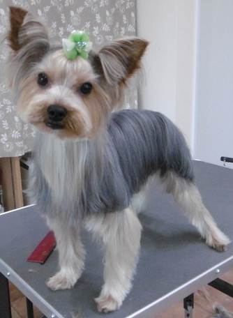 犬トリミング画像11